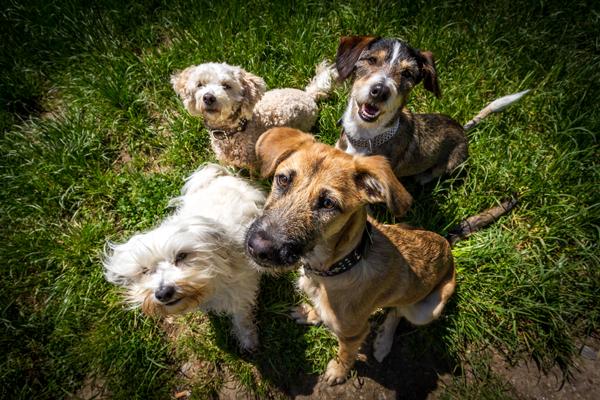 Dog & Cat Repair - Veterinary - Veterinarians - Tempe, AZ - Home